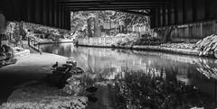 (photo.po) Tags: ef24mmf28stm canont6 canonphotography canon monochrome blackandwhite blackandwhitephotography etching shadows wroughtironbridge ducks water river riverwalk sanantonioriverwalk sanantonio texas