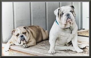 Doggies_2019