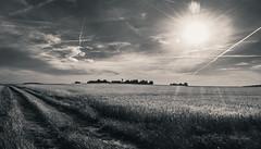 Paysage Campagne (christophe.beydon) Tags: campagne ciel soleil nuage chemin lumière rayon noir blanc monochrome nikon d7100 blé 1855
