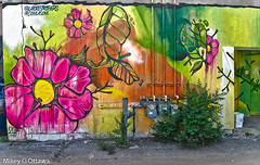 Floral - Ottawa 06 18 (Mikey G Ottawa) Tags: mikeygottawa canada ontario ottawa city street alley paint mural graffiti floral flower colour color couleur farbe