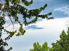 Saturday Evening. (dccradio) Tags: lumberton nc northcarolina robesoncounty outdoor outside outdoors greenery sky cloud clouds cloudformation scenic nature natural beauty tree trees foliage treebranch treebranches treelimb treelimbs branches branch landscape godshandiwork godscreation