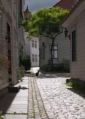 Cat in the alley (Linepusle) Tags: bergen wooden houses buildings alleys cat flowers smug smau tak katt