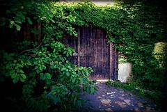 Old | alt (André-DD) Tags: dresden sachsen saxony nickern schloss castle deutschland germany tür door pflanze efeu plant eingang entrance