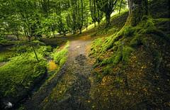 Hayedo de Otzarreta III (Jose Peral Merino) Tags: otzarreta hayedodeotzarreta arbol haya camino senda musgo arroyo riachuelo bosque helecho vizcaya paisvasco