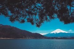 富士山 Fujisan|河口湖 (里卡豆) Tags: fujikawaguchikomachi yamanashiken japan jp 日本 tōkyōto olympus penf panasonicleicadg12mmf14 panasonic leica dg 12mm f14 kanto tokyo 富士山 fujikawa