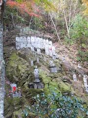 a (41) (hiromi89) Tags: japan beauty beautiful scenery flower wood pond