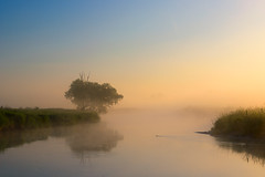Morning mists (fotoswietokrzyskie) Tags: grass sky mist water tree landscape nikon d800 river nida nikond800 serene wood morning dawn nikkor 80400mm f4556 g ed vr summer beaver