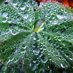 Wet Green Leaf thumbnail