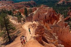 Bryce Canyon NP - Queen's Garden (•tlc•photography•) Tags: utah vacation brycecanyon queensgarden hike nationalpark hoodoos redrock sandstone highdesert
