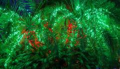 X-Mas Lights (vwalters10) Tags: xmas lights tree red blue