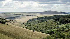 Melbury Down (SCRIBE photography) Tags: uk england dorset melbury landscape countryside fields hill hills trees clouds skies sky