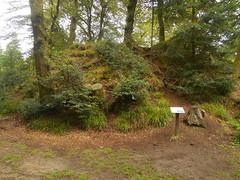 DSCN5580 (norwin_galdiar) Tags: bretagne brittany breizh finistere monts darrée nature landscape paysage