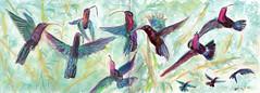 Colibris au JARDIN DE BALATA (Jluc22fr) Tags: jluc painting watercolor travel travelbook martinique westindies antilles france caribean 2017 wip final colibri