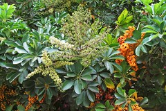 flowers and fruits :) (green_lover (I wait for your COMMENTS!)) Tags: bushes shrubs plants junglepark tenerife canaryislands spain vegetation blossom green