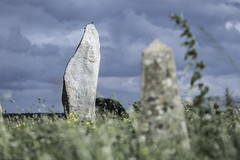 A Pigeon Sat on a Rock Reflecting on Existence (Norse_Ninja) Tags: gh5 panasonic pigeon bird stone circle journeyjd17 avebury england travel traveller