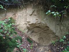 The sand (nesihonsu) Tags: poland polska sand outcrop piasek pogórzekaczawskie sudety sudetes sudeten lowersilesia dolnyśląsk dolnośląskie
