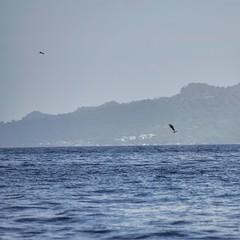 (fabhuleux) Tags: dolphin nature travel water saut jump dauphin bateau mer boat sea 1d canon france antilles martinique