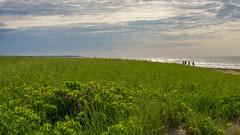 Beachgoers (Bud in Wells, Maine) Tags: drakesisland wells maine newengland seashore beachroses dunes dunegrass spring