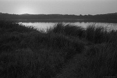 Dee Why lagoon wetlands at dusk  #972 (lynnb's snaps) Tags: 35mm bw blackandwhite film landscape nikonf80 afnikkor3570mmf3345 kodaktrix400bwfilm kodakxtoldeveloper nature wetlands lake lagoon deewhylagoon dusk sunset water peaceful reeds 2018 slr 35mmfilm bianconegro blackwhite bianconero biancoenero blancoynegro noiretblanc schwarzweis monochrome ishootfilm sydney australia