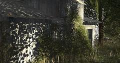 Nevgilde Forest Nea Barn (Neaira Aszkenaze) Tags: sri sargeredindustries nevgilde forest nevgildeforest stringlights trees nature overgrown worn rustic farmhouse barn building hangout music dancing live relax neascapes neas neaslittlecornerofsl neaslittlecorner