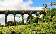 Six arches and a bramble (Peter Denton) Tags: viaduct bridge ousevalley balcombe westsussex england arches architecture brick railwayheritagetrust field bramble countryside railway englishheritage ©peterdenton canoneos100d brightonmainline