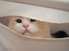 My lovely funny cat! (ilacostanzo) Tags: gatto cat animal gattino funny