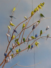 Brookfield, IL, Brookfield Zoo, Parakeets (Mary Warren 11.3+ Million Views) Tags: brookfieldil brookfieldzoo nature fauna bird parakeet