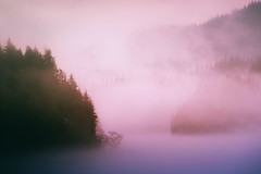Pastel Lake Fog (Atmospherics) Tags: trees forest fog dreamy mistthroughtrees pastelmist lowlight atmospherics lightthroughtrees foglight