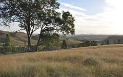 816 Muscle Creek Road, Muswellbrook NSW