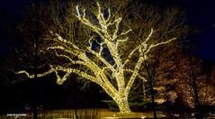 2017-12-29 Longwood Gardens 16 (zwzzjim) Tags: longwood garden nightscape flowers light serene park trllis walkway bright pond water luminous dream color christmas new year tree