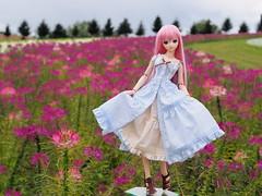 P8111502 (ranbutan) Tags: dd doll dollfiedream luka