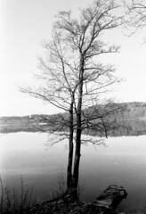 Tree (krzyzankowskig) Tags: tree nature analog bw pictorialism