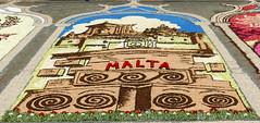 Tapis de fleurs de la délégation maltaise (Gozo) (CORMA) Tags: 2018 belgique belgium bruxelles brussels tapisdefleurs flowercarpet europe monumentsofunescoinflowers malte