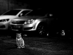 Cats' city, Istanbul... (maryduniants) Tags: cats turkey night darkness animals istanbul white cat black blackandwhite