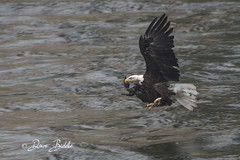 Working every muscle (littlebiddle) Tags: bird aves nature wildlife feathers