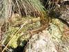 DSCF9372-922 (kytetiger) Tags: parque natural sierra de baza acequia toril andalousie andalousia