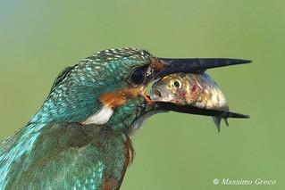 L'angoscia di un pesce...