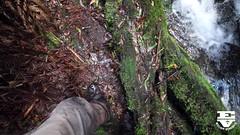 Upper Wye River- Willomi Falls (edarnfieldWK) Tags: otways wyeriver waterfall video relentlesscanyon treeferns ferns rocks pool creeks waterfalls cascades hiking trekking adventure otwayranges victoria canon willomi falls