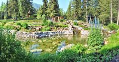Cascade Gardens, Banff National Park, Alberta - ICE(5)2658-68 (photos by Bob V) Tags: banff banffnationalpark banffalberta banffalbertacanada alberta albertacanada park banffpark garden flowergarden flowerbed cascadegarden flowers