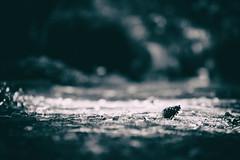_____c> (_elusive_mind_) Tags: monochrome minimalism blackandwhite bw wood nature