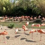 San Diego Zoo, San Diego, CA thumbnail