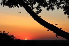 Sunset Tree & Plane (@FunkyAppleTree) Tags: richmond surrey england sunset crane cranes tower heatwave london city landscape industry sun light twilight silhouette construction vista colors sunny natural august summer orange