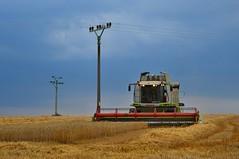 DSC_8962 (anetaležáková) Tags: summer sunset summerharvest sunnydays harvest agriculture agriphoto czechagri caseihpuma case casepuma165 caseoptum casepuma200 claas claaslexion newholland
