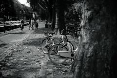 Bokeh@Kö, Düsseldorf 2018 Summer 4 (Amselchen) Tags: bike bicycle bnw blackandwhite mono monochrome sidewalk street season summer bokeh blur dof depthoffield sony a7rii sigmamc11 canon ef50mmf14usm sonyilce7rm2