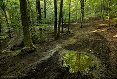 Almost perfect mirror... (ChusPS) Tags: nature light color forest foret nikon nikkor catalunya catalonia barcelona fogarsdemontclús vallesoriental unesco unescomab montseny santafedelmontseny water reflections manfrotto d7100 tree beech beechforest