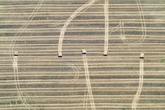 Stubble Field (Aerial Photography) Tags: brb pr 05082003 ackerbau bauernmalerei brandenburg deutschland feld fotoklausleidorfwwwleidorfde fotoklausleidorfwwwleidorfaerialcom germany getreidefeld goldgelb grafik landscapeandnature landschaft landschaftnatur landwirtschaft lenzen linien luftaufnahme luftbild p1 region s2p22073 spuren stoppelfeld strohballen abstract abstrakt aerial agriculture cornfield farmerspainting field graphicart graphics landscape landscapenature lines nature outdoor stubblefield traces tracks trails lenzenelbelkrprignitz deutschlandgermany deu