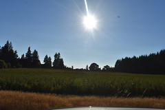 drop ph sun drop (wolf8_us) Tags: travels washingtonstate country olympia tumwater sunsets farms