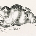 Illustration of domestic cat napping while three kittens play by Gottfried Mind (1768-1814). Original from Library of Congress. Digitally enhanced by rawpixel. thumbnail