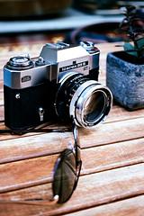 stylish paraphernalia (mkk707) Tags: film analog kodakektar100 olympuspenft zuiko38mmf35macro halfframe vintagelens vintagefilmcamera zeissikonvoigtländericarex35stm bokeh