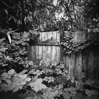 Hidden Gate